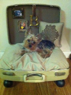 Suitcase Repurposed into a Travel Dog Bed. http://media-cache7.pinterest.com/upload/170222060885374980_QZwQiVd2_f.jpg robincample buller maison deux
