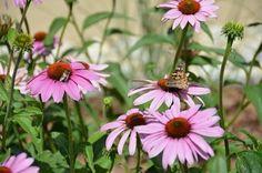 Kudy z nudy - Bylinková zahrada sv. Hildegardy v Čejkovicích Plants, Compost, Plant, Planets