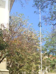 Escuela Central de Artes, Ave. Juan Ponce León. En esta imagen solo se ven las astas de las banderas ya que solo se utilizan en días laborables.