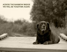 This print features an old Lab sitting on a bridge looking off into the distance. The print reads: Across The Rainbow Bridge We Will Be Together