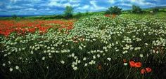Image result for franco azzinari Lavender Fields, Wild Flowers, Poppies, Grass, Vineyard, Italy, Plants, Outdoor, Google Search