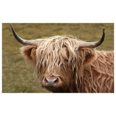 Highland Cow Printed