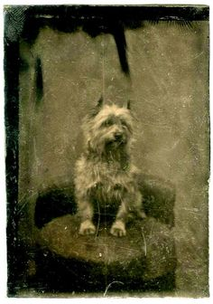 Vintage Doggy: Tintype Portraits of Dogs