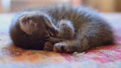 Cat Nap | Cutest Paw