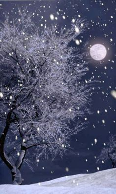 Snow in the moonlight Winter Szenen, I Love Winter, Winter Magic, Winter Christmas, Winter Night, Snow Night, Winter Blue, Winter Walk, Blue Christmas