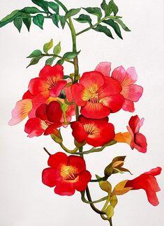 Botanical Illustration, Botanical Prints, Floral Prints, Flower Branch, Flower Art, Watercolor Flowers, Watercolor Art, Floral Painted Furniture, Beautiful Flower Drawings