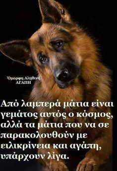Dogs 🐶 - Cute Dogs, Dog cat and Doggies. Funny Animal Pictures, Funny Animals, Cute Animals, Funny Dogs, Cute Dogs, Greek Quotes, Dog Memes, Dog Quotes, Really Funny