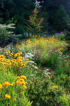 Love the wild look and the mounds of yellow Coreopsis // Great Gardens & Ideas // Beautiful Gardens, Beautiful Landscapes, Dream Garden, Meadow Garden, Prairie Garden, Prairie Planting, Woodland Garden, Nature Aesthetic, Wild Flowers