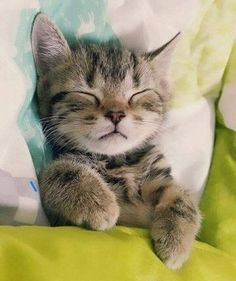cat nap! sweet dreams!