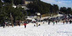 8 _ محمية الشريعة ( ولاية البليدة ) من اجمل المحميات الثلجية في الجزائر تكسوها الثلوج معظم اوقات السنة و تحتوي على شاليهات للكراء و اماكن لممارسة رياضات التزحلق