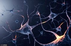 Researchers discovered when neurons, pictured, with D1(dopamine) receptors are activated, they compel us to perform an action - reaching for another bottle of tequila, in this case. By suppressing the D1 receptors, scientists found they were able to suppress the compulsion to drink alcohol