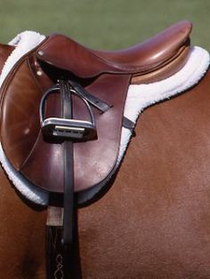 Master Saddle Deborah Witty explains seven saddle-fit points so you can become an informed consumer.