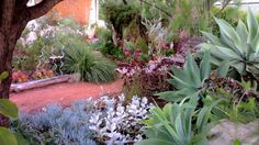 succulent and native garden design Perth, Small Backyard Landscaping, Landscaping Ideas, Australian Native Garden, Coastal Gardens, Modern Garden Design, Succulents Garden, Garden Beds, Garden Projects