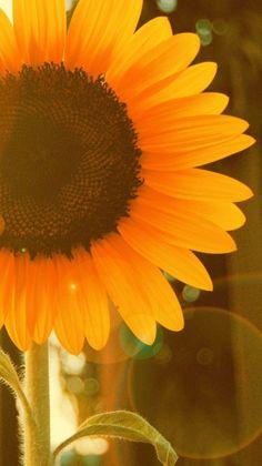 Ideas For Wallpaper Sperrbildschirm Natur wallpaper 728386939717693280 Paper Sunflowers, Sunflowers And Daisies, Sunflowers Background, Sun Flowers, Simple Flowers, Red Colour Wallpaper, Colorful Wallpaper, Pattern Wallpaper, Christmas Lights Wallpaper