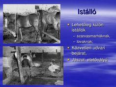 Istálló<br />Lehetőleg külön istállók<br />szarvasmarháknak,<br />lovaknak;<br />Közvetlen udvari bejárat,<br />Jászo...