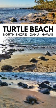 Hawaii travel tips for US beach vacation ideas. best things to do in oahu hawaii. Where to see turtles in Oahu North Shore, drive from Waikiki and Honolulu. Oahu Hawaii, Hawaii Honeymoon, Hawaii Beach, Hawaii Life, Turtle Beach Oahu, Hawaii Trips, Visit Hawaii, Oahu Vacation, Vacation Trips