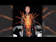 Biologist catches monster 70-year-old lobster in California and releases it in a marine reserve.