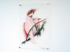 Vintage meets contemporary in Signarture's perspex art Vibrant Colors, Colorful, Affordable Art, Beautiful Birds, Three Dimensional, Amazing Art, Watercolor Tattoo, Interiors, Bright