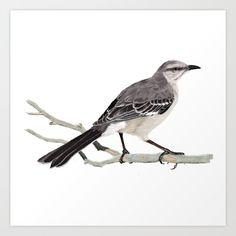 Mockingbird Bird Digitalpainting Painting Digital Cenzontle Nature Illustration