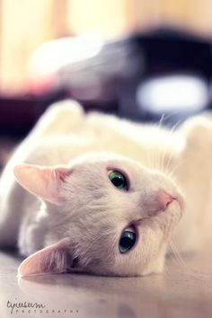 """""""Cats are distant, discreet, impeccably clean, and able to stay silent.  What more could be needed to be good company? --Marie Lecinska"""