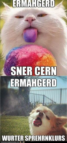 funny pictures - ERMAHGERD!