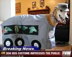 a greyhound dressed as a greyhound.