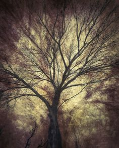 Fine art photography created using multiple layers of trees combined with texture overlays by Martin Osner Photography Gallery, Fine Art Photography, Nature Photography, Learn Photography Online, Abstract Expressionism Art, Photorealism, Photographic Prints, Artwork Online, Buy Art