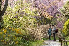 Japaninfo at 京都 桜の楽園『原谷苑』.