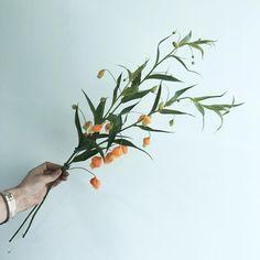 . . #샌더소니아 . . 그림같은 샌더소니아 ❣️ . . #lesson #Order 👉🏻Katalk ID vaness52 클래스상시모집 당일꽃주문가능 WeChat ID vaness-flower E-mail vanessflower@naver.com 강남구 신사동 515-2 📞02-545-6813 . #vanessflower #flower #florist #flowershop #handtied #flowerlesson #flowerclass #바네스플라워 #플라워카페 #플로리스트 #꽃다발 #부케 #원데이클래스 #플로리스트학원 #신사동꽃집 #가로수길꽃집 #플라워레슨 #플라워아카데미 #꽃수업 #꽃주문 #하우스웨딩 #스몰웨딩  #花 #花艺师