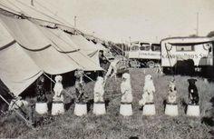 Conroy Bros. Circus 1936 #5