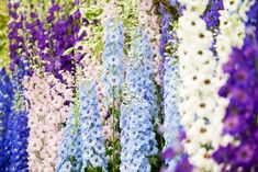 Add height and color to your garden with these easy-to-grow flowers.