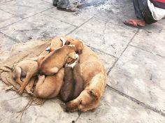 세상 제일 편한 엄마 품   #인도 #갠지스강 #india #ganges #dog #엄마품 by bychoi4s