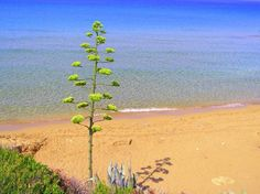 Ammes Beach - Svoronata, Cephalonia
