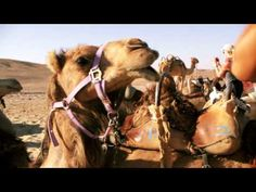 Birthright Israel: Israel ExperienceGet Your Israel Experience | Birthright Israel: Israel Experience
