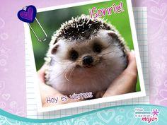 #Viernes #Humor #Risa #Bella #Belleza #Cortes #Cabello #Mujer #Fashion #Estilo #Femenino #Love