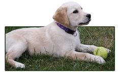 ECAD - Educated Canines Assisting with Disabilities - Service Dogs