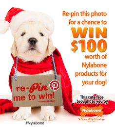 Follow #Nylabone on #Pinterest and repin this photo for a chance to win $100 worth of #dog #goodies #giveaway #sweepstakes: http://www.nylabone.com/pinterest-sweepstakes.htm
