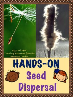 Crops and Seeds Fingers-On Seed Dispersal Exploration (NGSS aligned) Article Physique: Each lady is Seed Dispersal, Plant Science, Science Fair, Third Grade Science, Stem Projects, Applied Science, Nature Study, Biomes, Thinking Skills