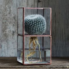 Sometimes the roots of a plant can be just as beautiful and interesting as the flower! This terrarium highlights the whole plant with two removable glass parts. Both lower and upper cases are made of glass with copper edges and can be separated for easy cleaning and re-watering. Ideal for succulents and cactus. Dimensions:3 (w) x 3 (l) x 6.5 (h) or 76mm (w) x 76mm (l) x 165mm (h) Weight:1.15 lbs or 0.52 kg Materials:Castor Aralia (Sen Wood) Made in JapanCopper metal edgesComposed of two…