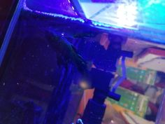 Whats happening to my fishs fins?