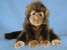 29 Best Cute Monkeys For Sale Images Cute Monkey Monkeys For Sale