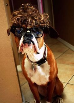Funny boxer... I miss my dog!   ...........click here to find out more     http://googydog.com
