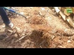 Interesting Free Sources to Collect Mulch for your No Till Mulch Gardens