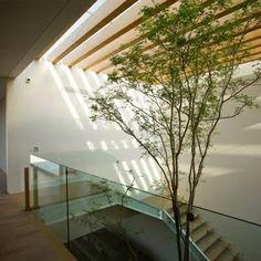 Escaleras iluminacion y naturaleza