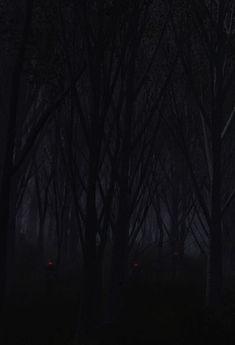 Eyes amongst the trees........