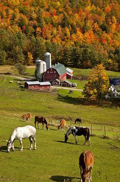 Country Living ~ horse pasture and barns