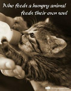 Who feeds a hungry animal feeds their own soul