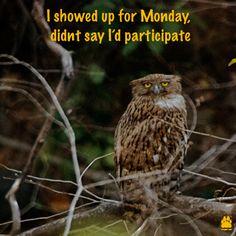Monday Work Tantrums!