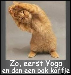 Funny Humor Yoga Cat Refrigerator Magnet for sale online Happy Animals, Cute Funny Animals, Funny Cats, Orange Tabby Cats, Grumpy Cat Humor, Crazy Cat Lady, Animal Memes, Funny Pictures, Ebay