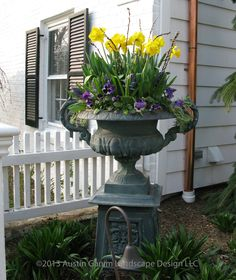 Spring Planter with yellow daffodils, pussy willow, and pansies.